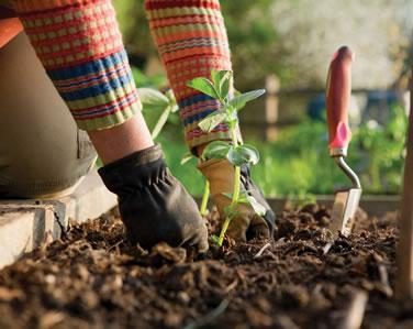 jardinagem em curitiba preço