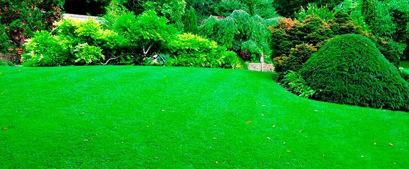 jardinagem curitiba preço